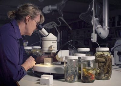 Queensland Museum's Extinct Species Collection